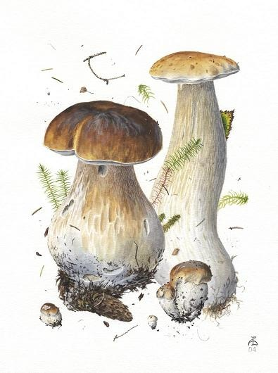 1000+ images about amanita muscaria on Pinterest.