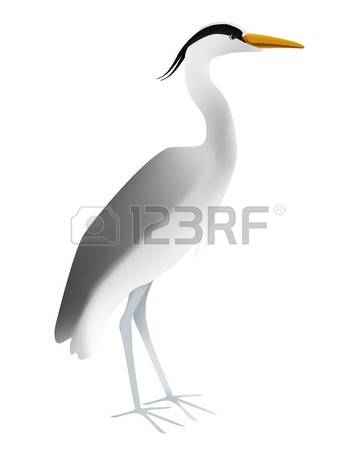 114 Grey Heron Stock Vector Illustration And Royalty Free Grey.
