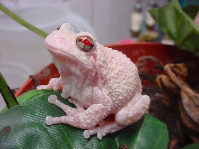 1000+ images about Frogs & Toads on Pinterest.