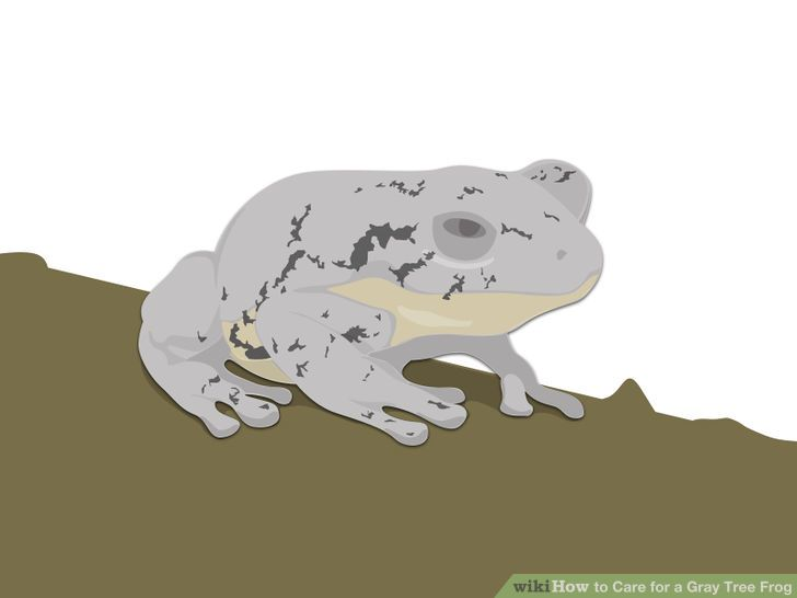 How to Care for a Gray Tree Frog: 10 Steps (with Pictures).