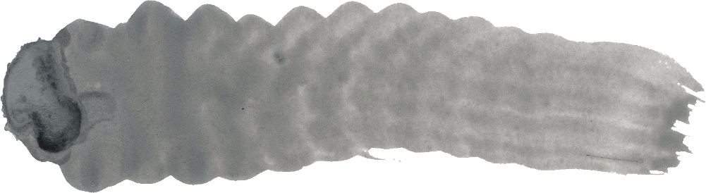 30 Grey Watercolor Brush Stroke (PNG Transparent).