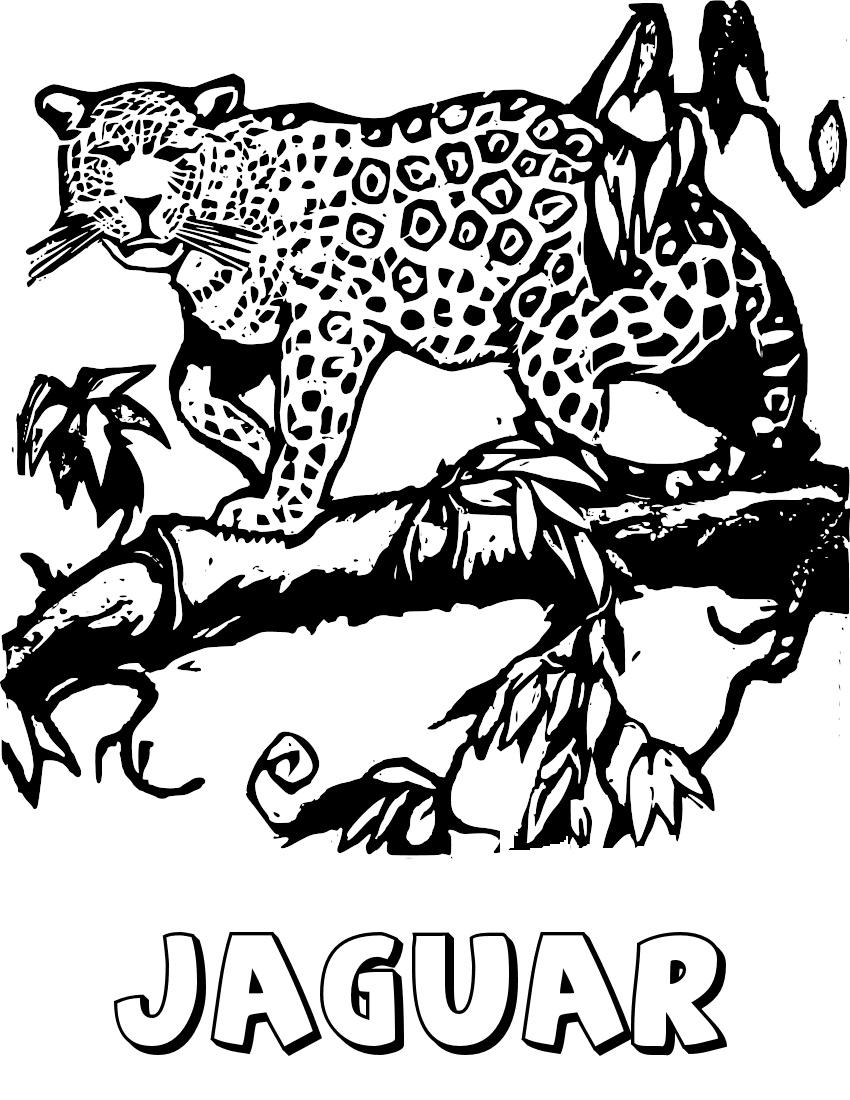 Free Jaguar Clipart, 1 page of Public Domain Clip Art.