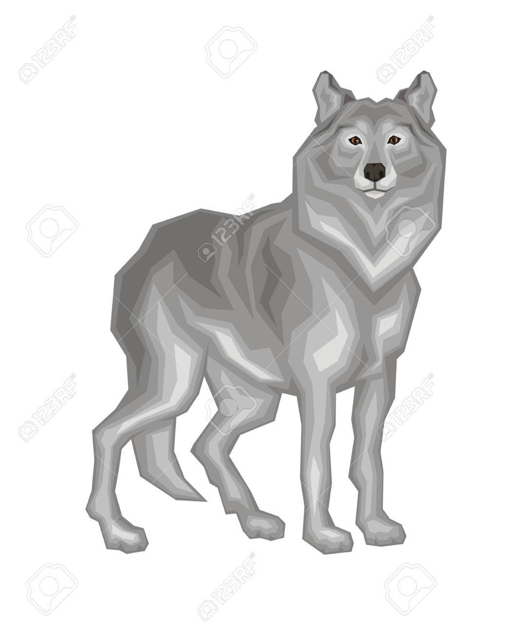 The big grey wolf. Vector image of a predatory animal. Isolated...