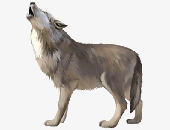 Grey wolf clipart 4 » Clipart Portal.