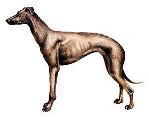 Free Greyhound Clipart.