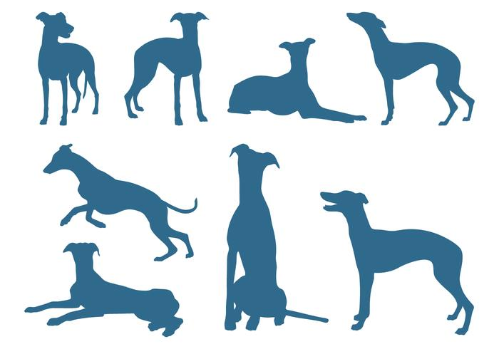 Silhouettes of Greyhound Dogs.