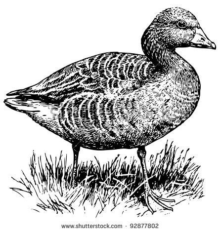 Greylag goose clipart #11