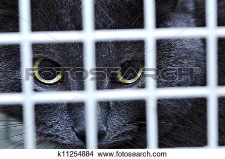 Stock Photo of Female cat behind cage door watch grimly k11254884.