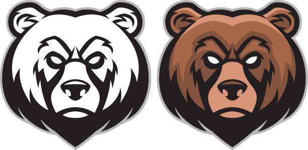 Best Grizzly Bear Illustrations, Royalty.