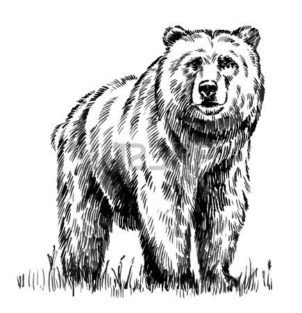 Grizzly Bear Clipart Black And White.