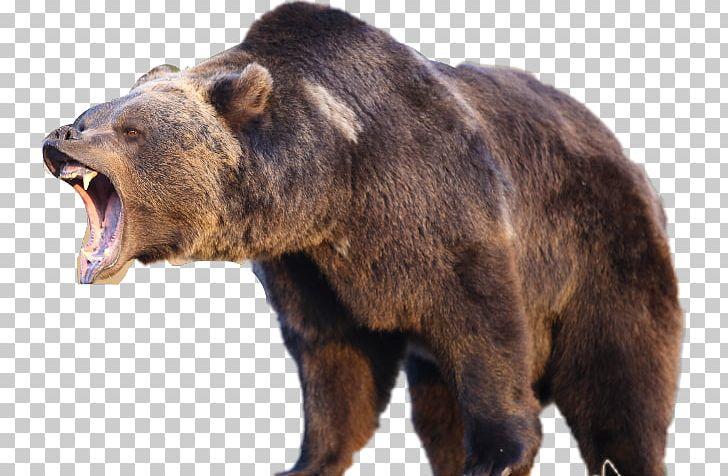 Yellowstone National Park American Black Bear Grizzly Bear Polar.