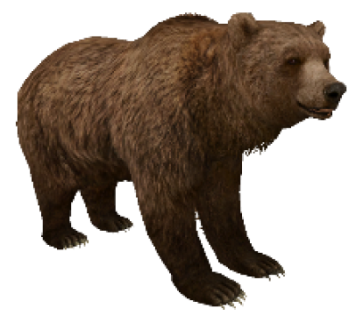 Download Free png Download Free png PNG Grizzly Bear Transparent.