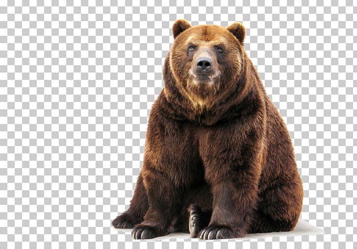 Brown Bear Polar Bear Stock Grizzly Bear PNG, Clipart, American.