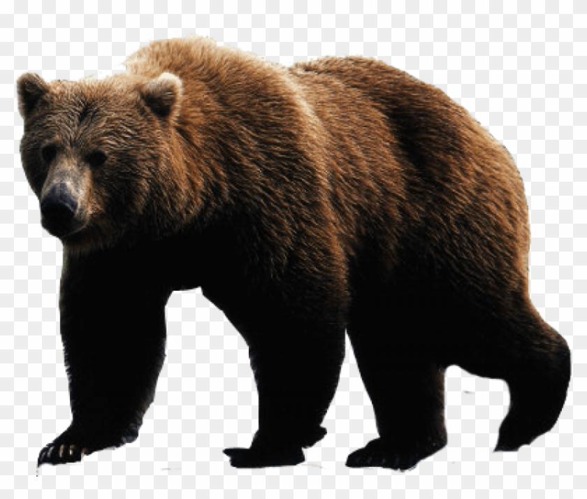 Brown Bear Png Image.