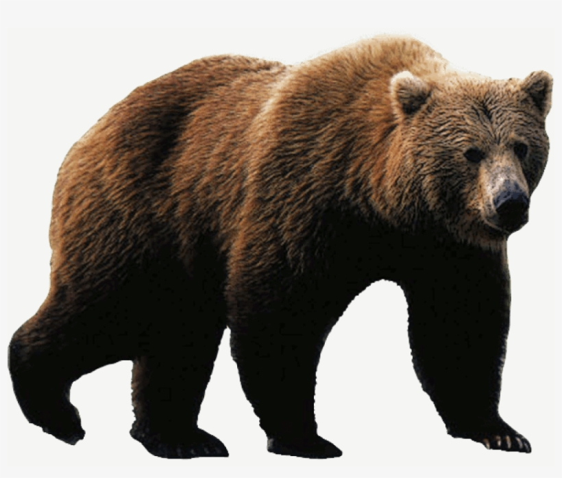 Download Free png Free Png Bear Png Images Transparent Grizzly Bear.