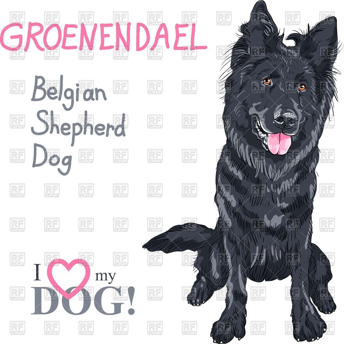 Portrait of dog of Belgian Shepherd Dog breed.