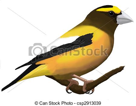 Grosbeak Illustrations and Clipart. 55 Grosbeak royalty free.