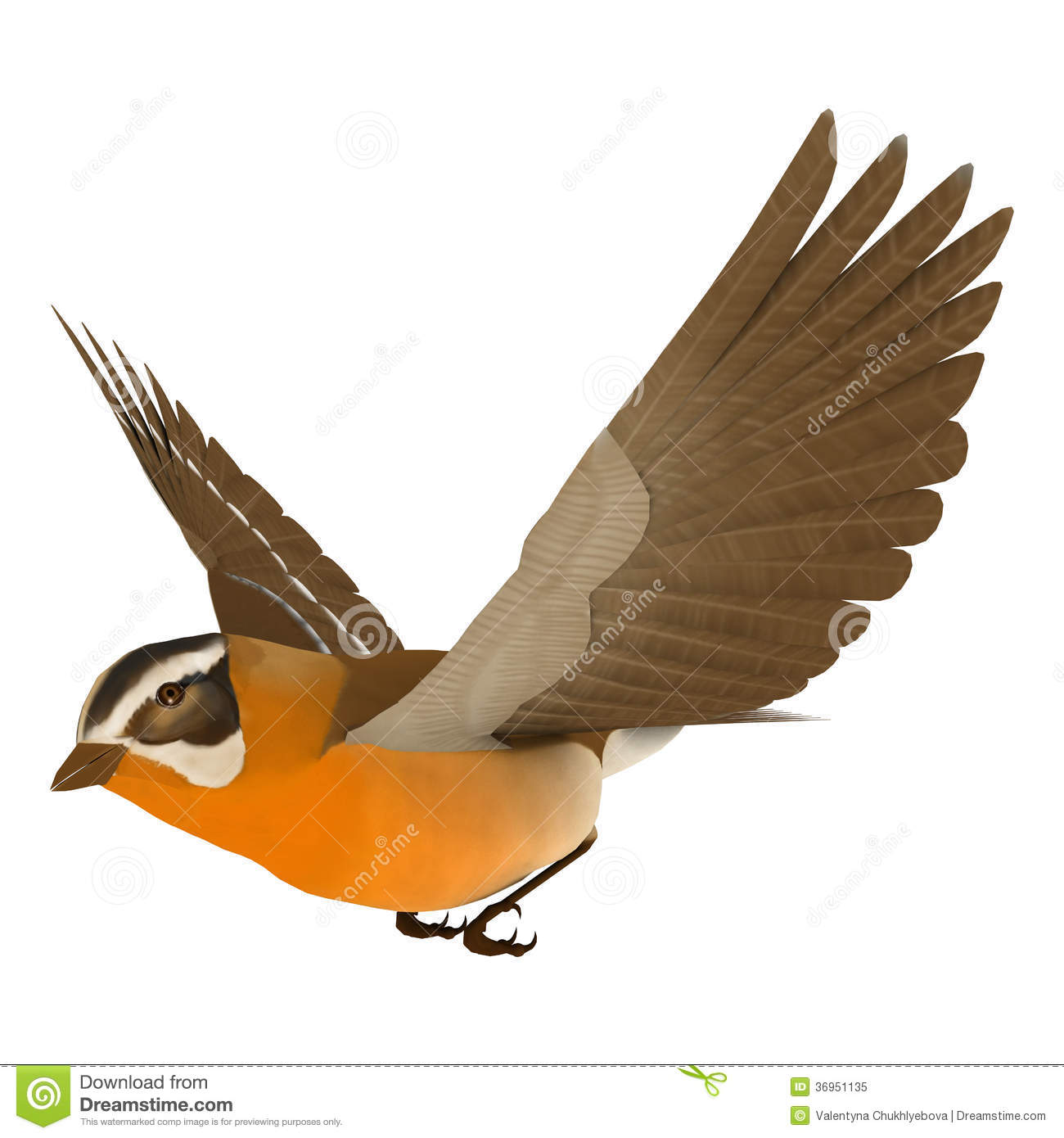 Song bird clipart.