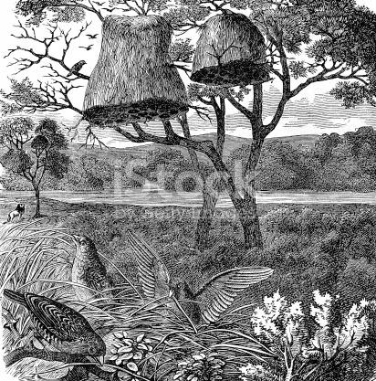 Sociable Grosbeak Or Weaver Bird Nest stock vector art 168770955.