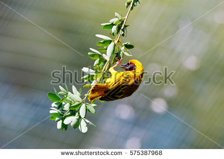 Bird Upside Down Stock Photos, Royalty.