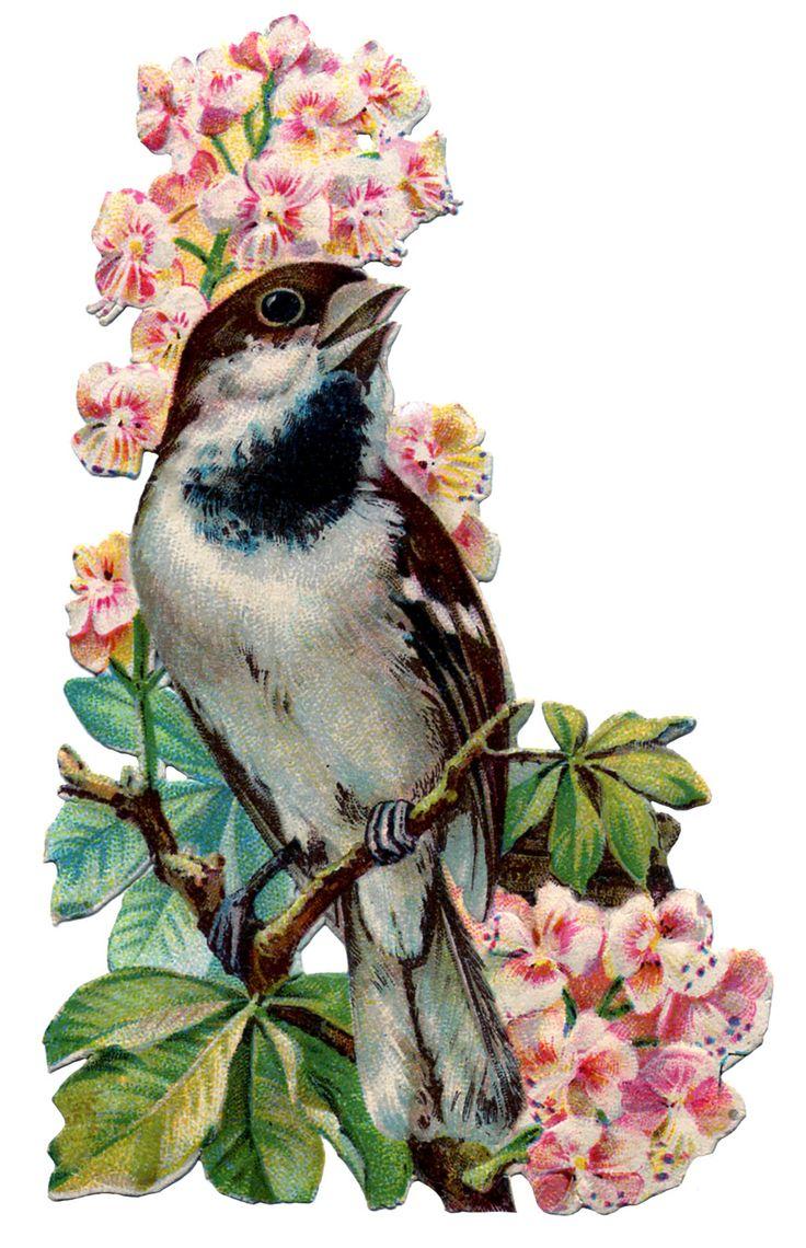 1000+ images about Vintage: Birds on Pinterest.