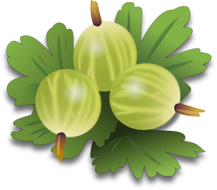Free vector graphic: Gooseberry, Berry, Fruit.
