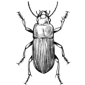 Beetles Clipart.
