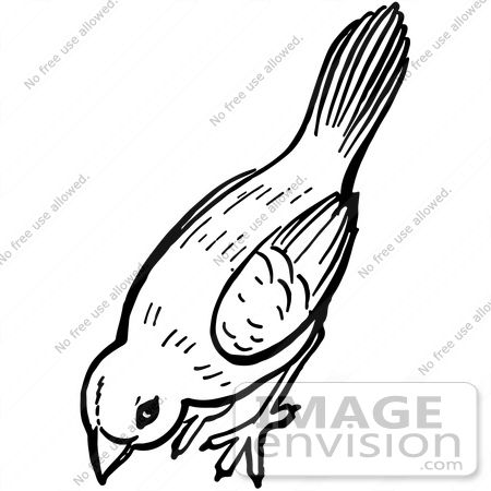 Clipart Of A Bird Pecking The Ground In Black And White.