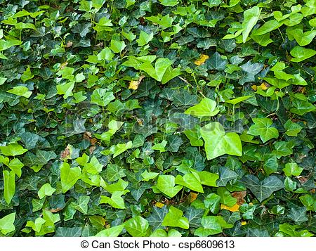 Ground cover Stock Photo Images. 8,554 Ground cover royalty free.