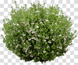 Groundcover transparent background PNG cliparts free download.
