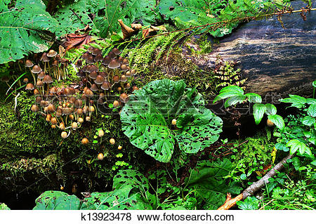 Pictures of Mushrooms and plants on the groundcover in the wood.