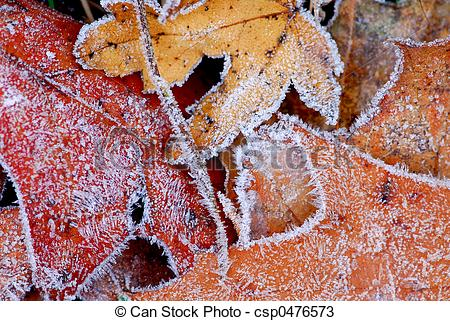 Stock Photos of Frosty leaves.