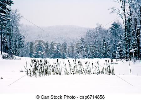Pictures of Cat Tails in Snow.