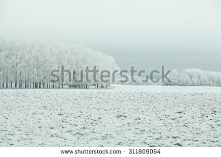 Winter Frost Stock Photos, Royalty.
