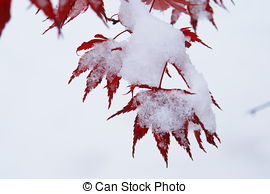 Picture of leaves with frost on the ground in december csp29095371.