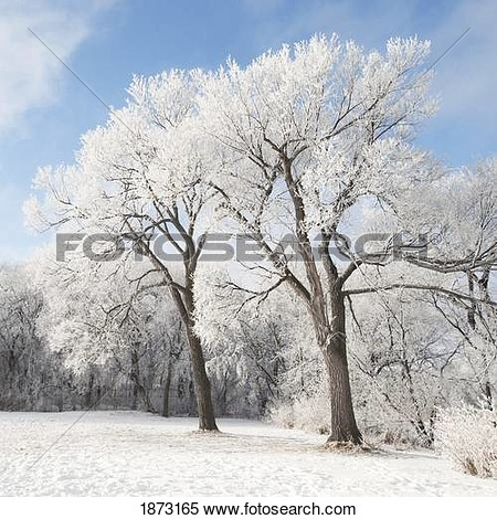 Tree Clipart Gray With Ground.