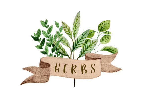 Rain Bath Herbs Clipart Clipground
