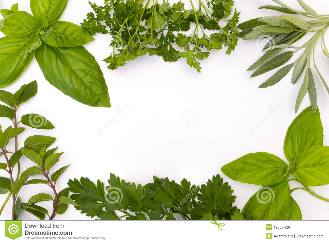 Herb Border On White Background Royalty Free Stock Photos.