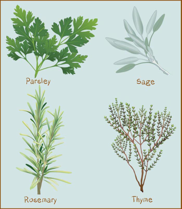 All About Spices and Herbs.