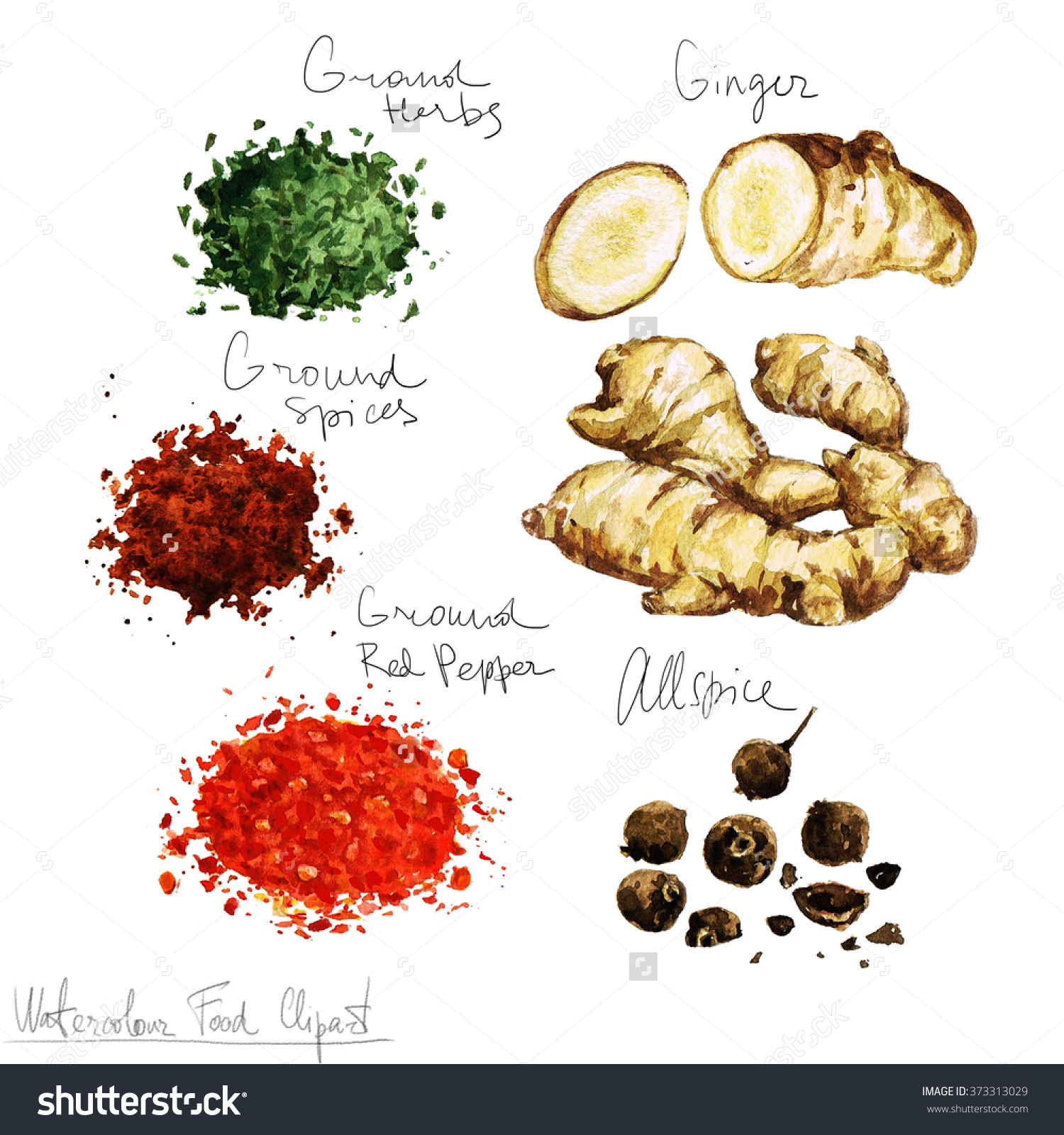 Watercolor Food Clipart Spices Stock Illustration 373313029.