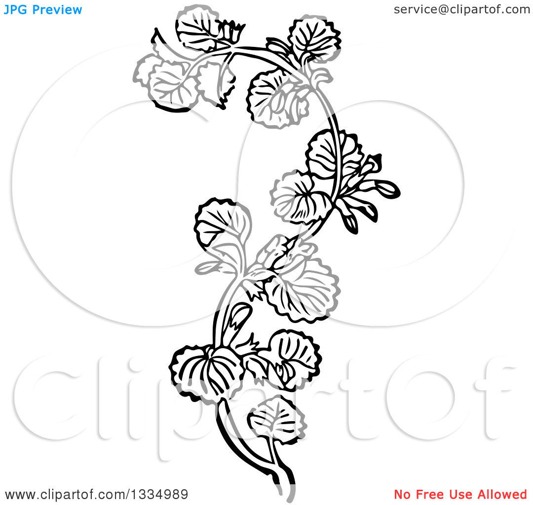 Clipart of a Black and White Woodcut Herbal Medicinal Ground Ivy.