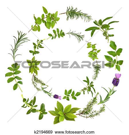 Stock Illustration of Abstract Herb Leaf Design k2194669.