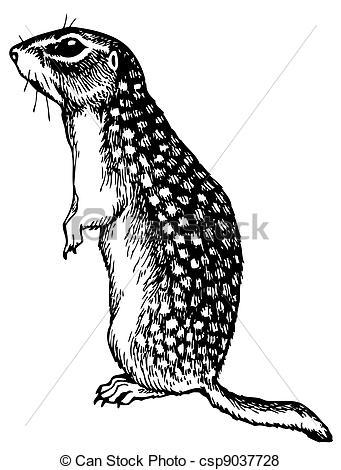 Ground squirrel Illustrations and Clipart. 91 Ground squirrel.