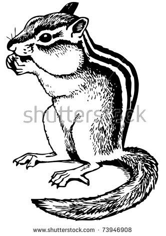 Ground Squirrel Stock Vectors, Images & Vector Art.