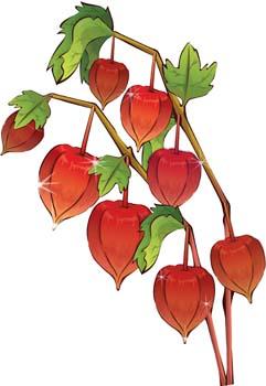 Ground-cherry clipart #19