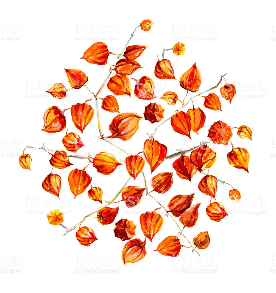 Circle From Ground Cherry Greeting Cards stock vector art.