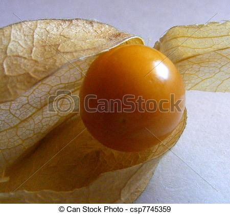 Stock Photography of Peruvian ground cherry ( Physalis peruviana.