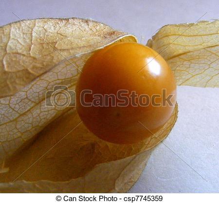 Stock Photography of Peruvian ground cherry ( Physalis peruviana.