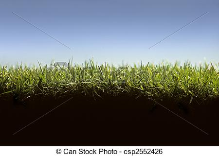 Stock Image of Cross section of lawn showing grass at ground level.