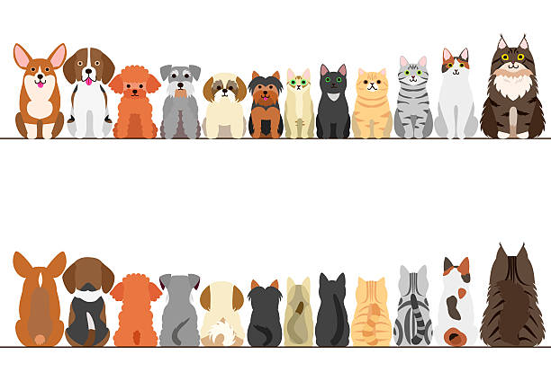 Best Group Of Cats Illustrations, Royalty.